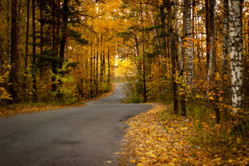 the autumn road in the wood