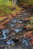Glittering Brook - 230069038