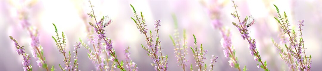Horizontal banner with lavender flower and butterfly © Ganna Chabanenko