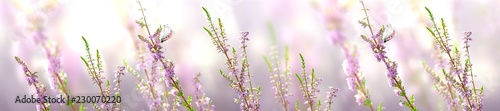Horizontal banner with lavender flower and butterfly
