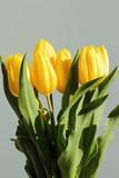 bunch of yellow tulips, fresh nice flowers