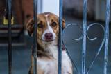 A dog called Malu staring the camera. São Pedro, São Paulo, Brazil, 2018.