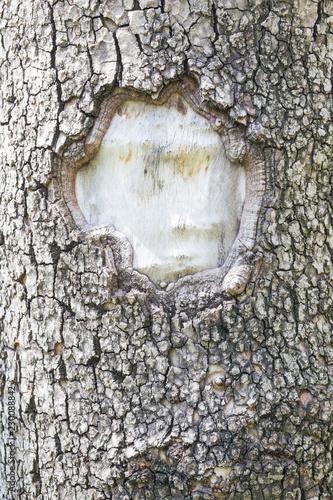 Tree Texture - 230088842
