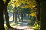Baumallee an einem Morgen im Herbst - 230125893
