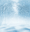 Leinwanddruck Bild - Winter background. Christmas landscape with snowdrifts and tree branches in the frost