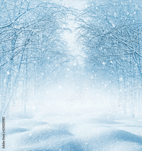 Leinwanddruck Bild Winter background. Christmas landscape with snowdrifts and tree branches in the frost