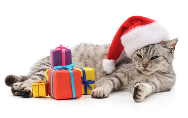 Cat with Christmas gifts. © voren1