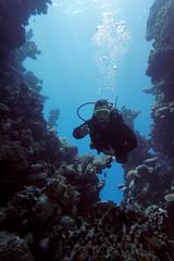 Taucher im Korallenriff gibt das Okay-Zeichen