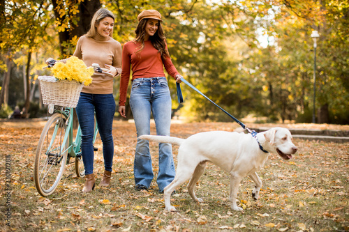 Two female friends walking in the autumn park with dog and bicycle - 230191288