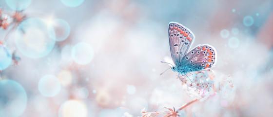 Schmetterling auf Frühlingswiese