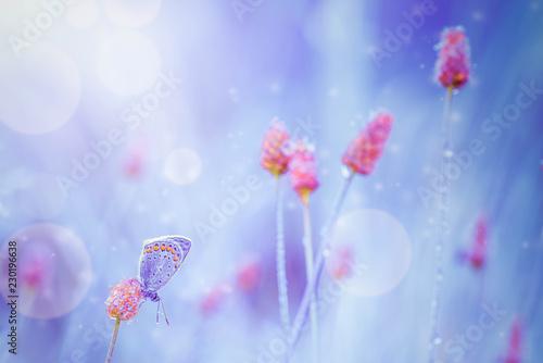 Fantasy Meadow - 230196638