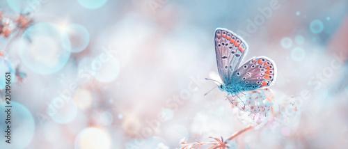 Foto Murales Schmetterling auf Frühlingswiese