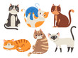 Cute cats. Fluffy cat, sitting kitten character or domestic animals isolated vector illustration collection