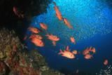 Fish on underwater coral reef  - 230215616