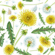 Floral seamless pattern, dandelions print on paper or textile. Dandelions background. Summer plants. - 230237203