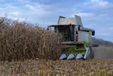 harvesting of corn - 230246239