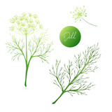 Set of herbs. Dill colored. Hand drawn. Vector illustration - 230254090