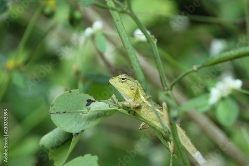 zielona jaszczurka na liściu