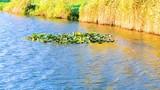 Jezioro z otaczającymi roślinami - 230295823