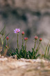 Wild flower on rock