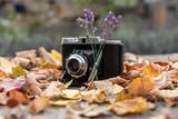Vintage Kamera mit Sträußchen Lavendel und umgeben von bunten Herbstlaub - 230335438
