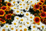 daisy flowers texture