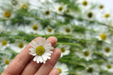 little daisy on the tips of your fingers