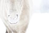 CloseUp Maul Pony im Schnee - 230414894