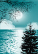fir and bare branches near sea at full moon - 230417631