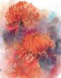 Chrysanthemums autumn flowers watercolor painting illustration