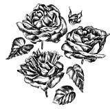 Beautiful graphic set with flowers rose and leaves.  - 230474474