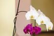 Beautiful white purple pink orchids