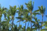 palme contro cielo azzurro