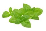 liść bazylii - 230497202