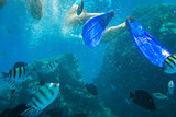 Red Sea underwater scenery with tropical fishes, Egypt - 230499255
