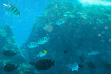 Red Sea underwater scenery with tropical fishes, Egypt - 230499290
