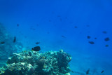 Red Sea underwater scenery with tropical fishes, Egypt - 230500868