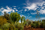 View of tropical landscape with trees and plants on the blue sky background - 230501488