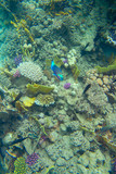 tropical fish in coral reef - 230502608