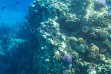 Coral reef of Red Sea with tropical fishes, Egypt - 230503401