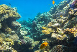 Coral reef of Red Sea with tropical fishes, Egypt - 230503460