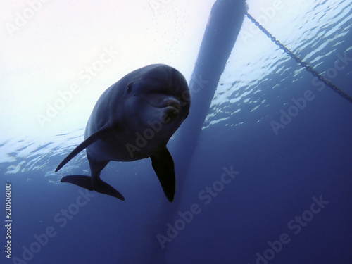 dolphin silhouette on new site KAst