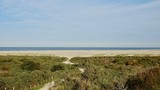 Dünenlandschaft am Meer in Zeeland, Niederlande - 230508822