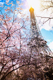 Blossoming magnolia against the background of the Eiffel Tower © Sergii Mostovyi