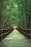 Mangrove forests around the footbridge