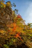 Autumn Leaves of Narukokyou - 230556889