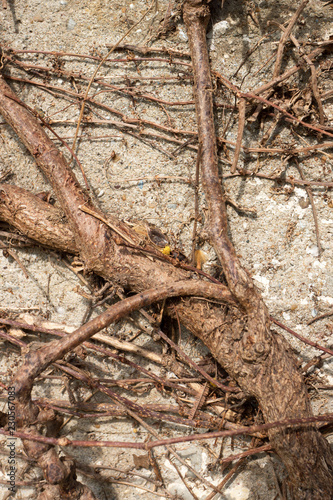 Dried Branches on stone wall Background. - 230567083