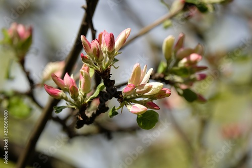 branch of a tree with flowers - 230569600