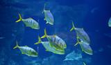 Wild fish in a huge beautiful aquarium, VDNKh Moskvarium pavillion - the biggest in Europe sea aquarium and entertainment center, Moscow, Russia