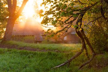 Sunrise sunbeams penetrating through trees in village © YKD
